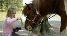 My own Pony at Center Parcs Bispinger Heide