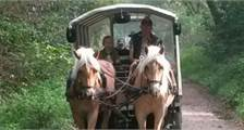 Center Parcs Excursions: Covered wagon ride at Center Parcs Het Meerdal